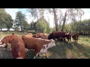 Virtuell film om lantbruk