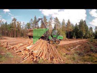 Virtuell film om att arbeta med skogsbruk